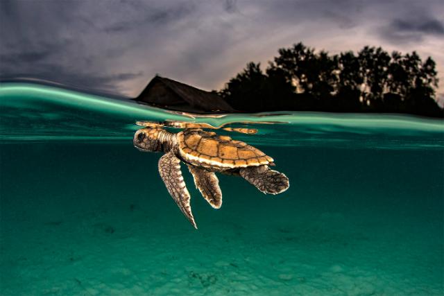 Grasso Alessandro⁄Фестиваль «Золотая черепаха»