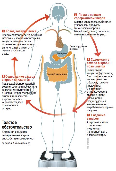 Почему в крови понижается сахар