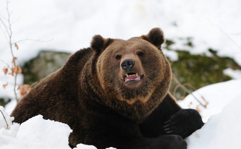 Египетские журналисты составили список самых опасных животных России