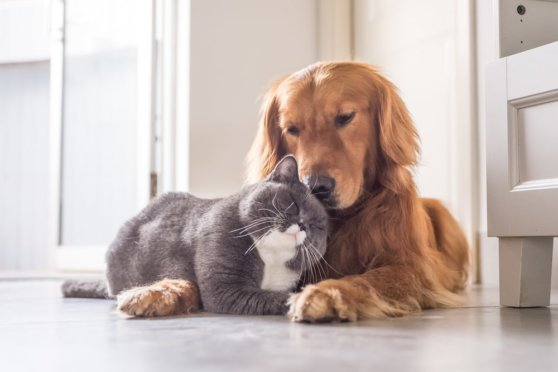 В Великобритании запретили продажу котят и щенков через посредников