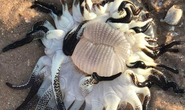 ВАвстралии обнаружили морское «чудище» с огромным ртом