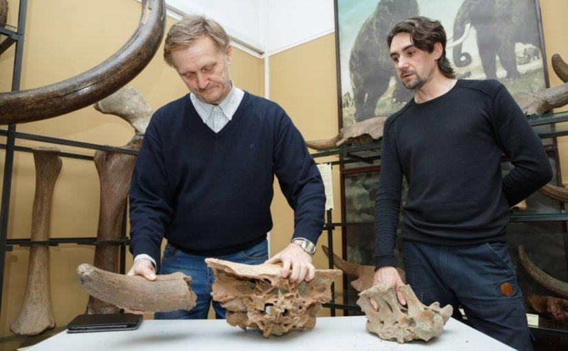 В Кемеровском областном краеведческом музее появились останки древних бизонов