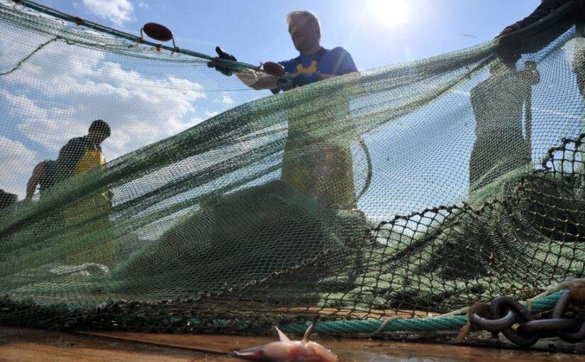 Британские ученые нашли микропластик в каждом обследованном морском млекопитающем