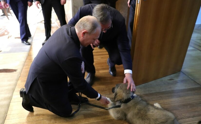 Вучич пополнил свору Путина