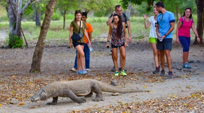 Комодский варан, туристы