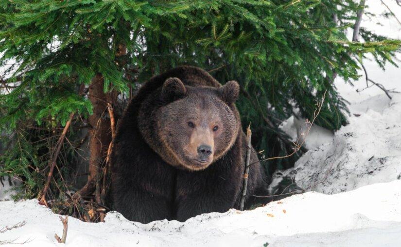 В США потерявшийся в лесу мальчик заявил, что его спас медведь