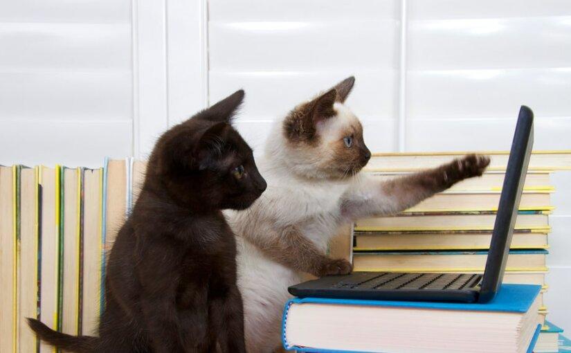 Ученые: наличие в доме кошки повышает риск развития шизофрении