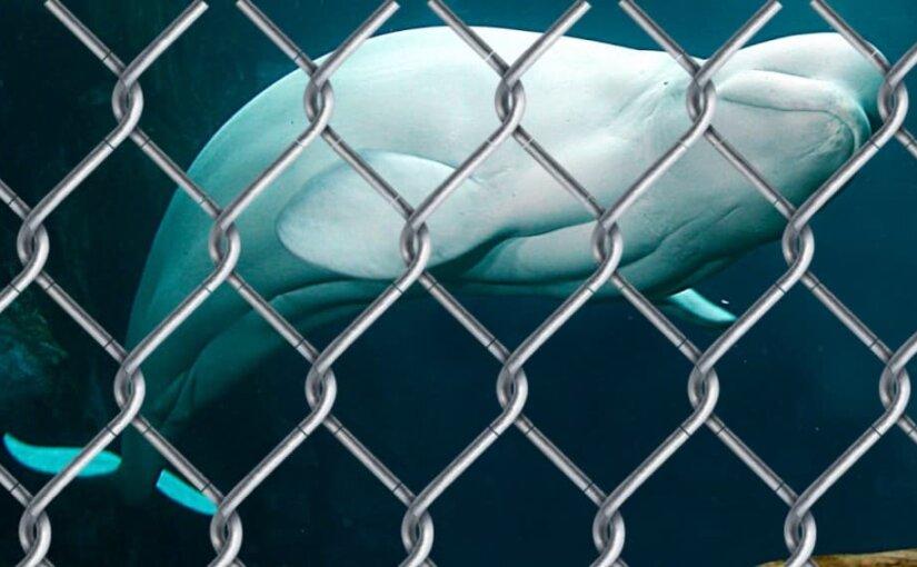 По делу о «китовой тюрьме» возбудили административные дела