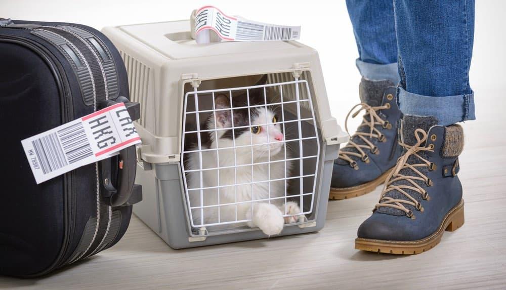 Контейнер для перевозки животных, самолет, багаж