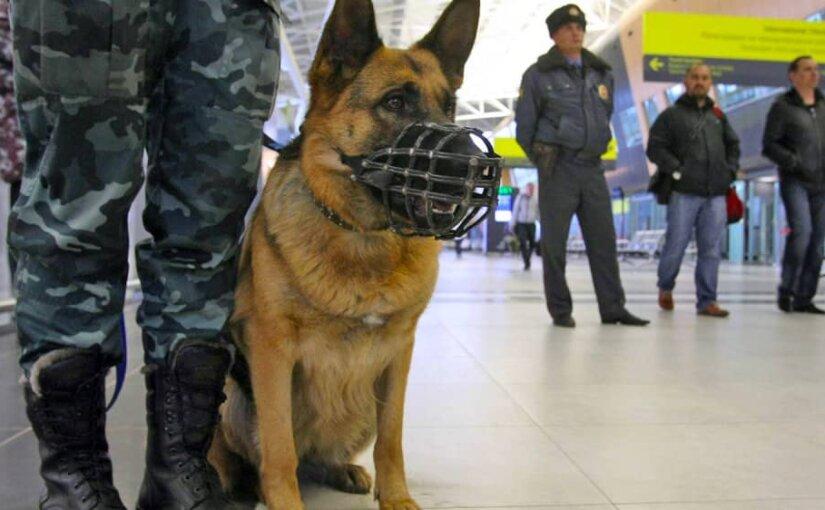 Из торгового центра в Москве эвакуировали 700 человек