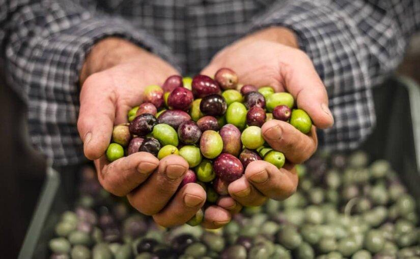 ФТС предлагает запретить импорт оливок из стран Евросоюза