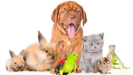 Домашних животных России соберут в одну базу