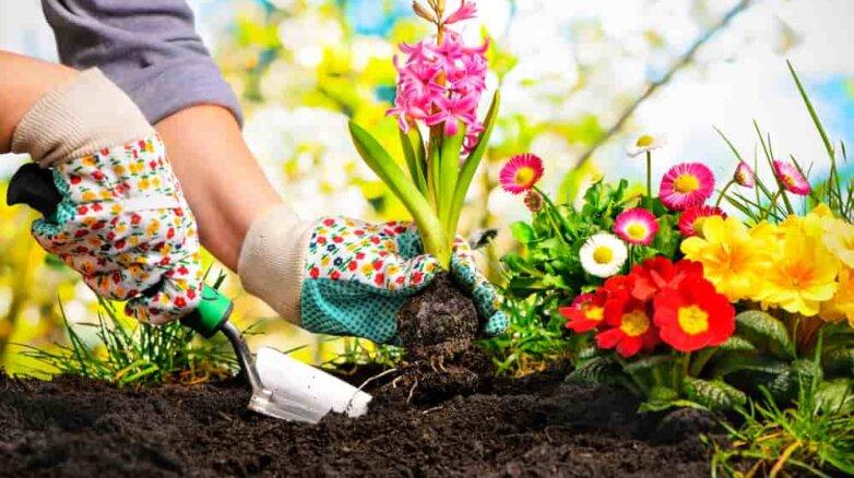 Садоводство, цветы