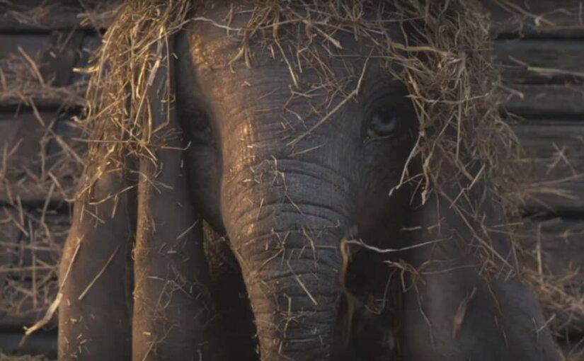 Трейлер фильма Бертона «Дамбо» про летающего слоненка появился в сети