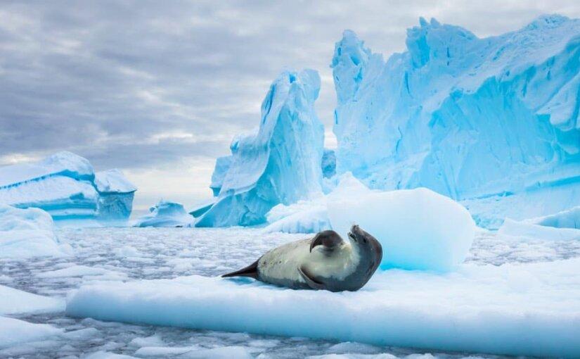 От Австралии до Антарктиды: составлен список райских мест для продолжения рода