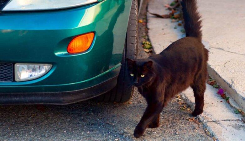 черный кот суеверия