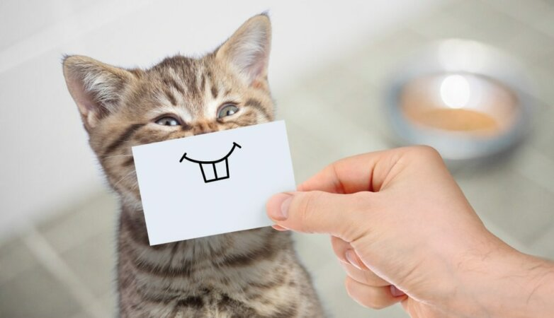 cat кошка кот