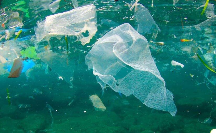 В погибшем ките на Филиппинах обнаружили 40 килограммов пластика