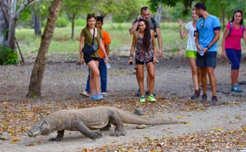 В Индонезии закроют для туристов остров Комодо