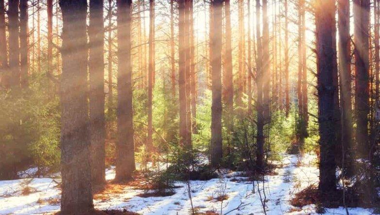 Весна, лес, солнце, снег, погода