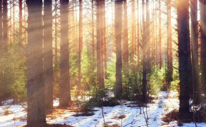 Сибирь стремительно теряет лесные ресурсы