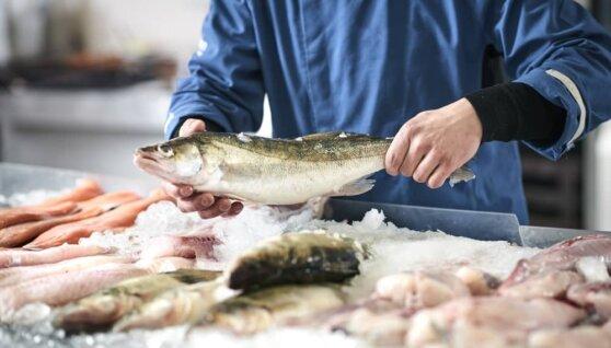 Осенью 2019 года в России может возникнуть дефицит рыбы