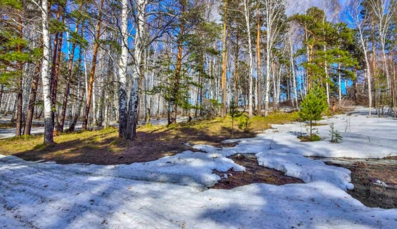 Весна, оттепель, лес, снег