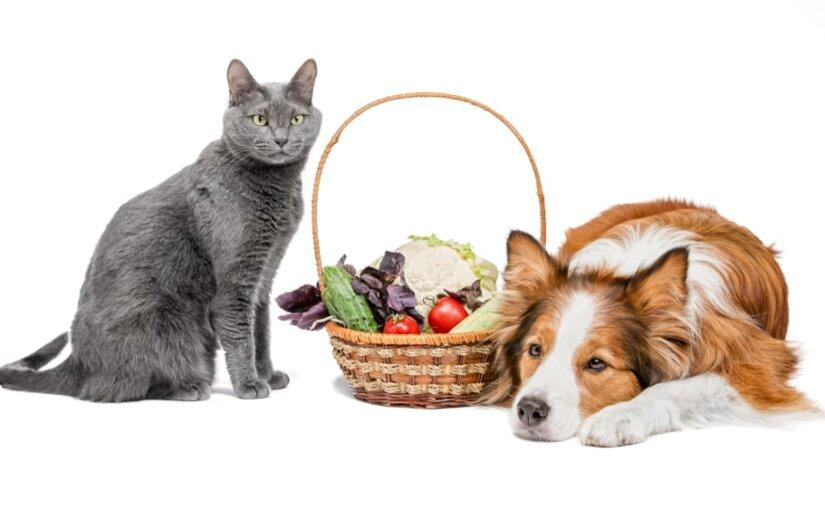 Ученые рассказали, почему коты становятся долгожителями