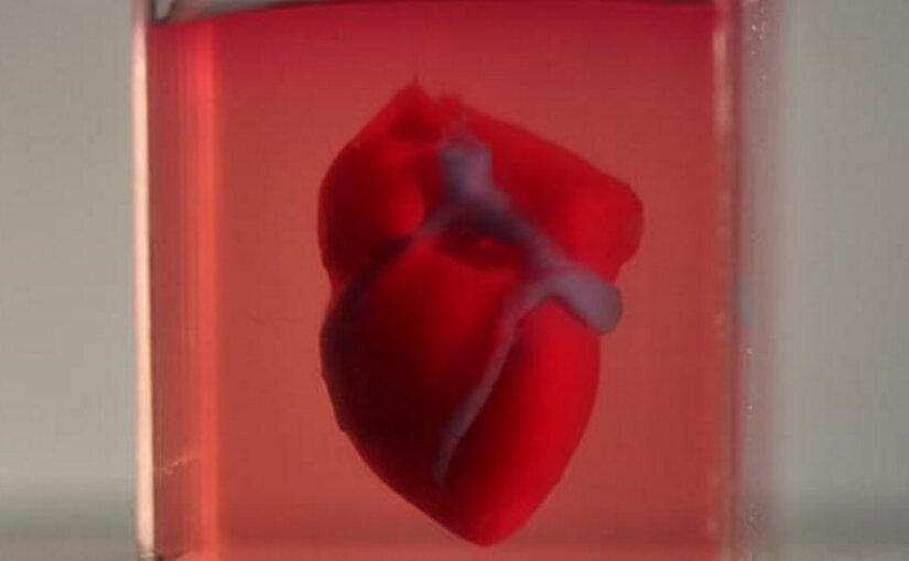 Ученые впервые напечатали живое сердце на принтере