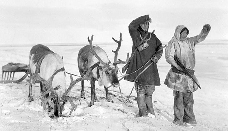 Долганы просят КС РФ разрешить охоту на дикого оленя: без традиционного промысла  народность на грани выживания