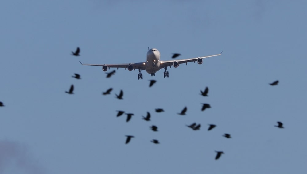 Самолёт, птицы, столкновение