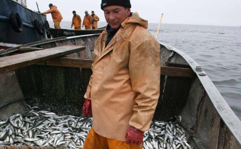Что мешает государству навести порядок в рыболовецкой отрасли?