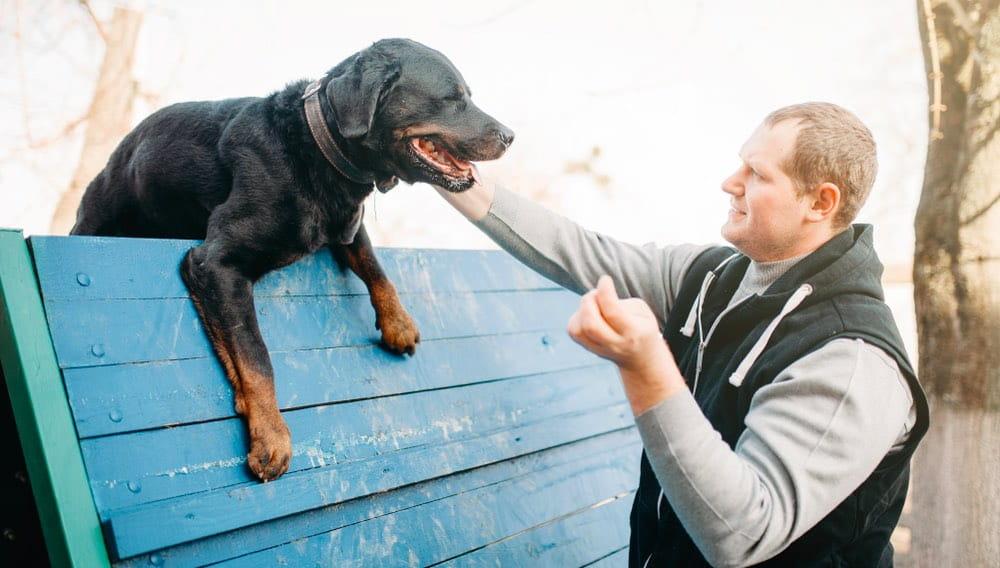 собака, пес, человек, собаковод