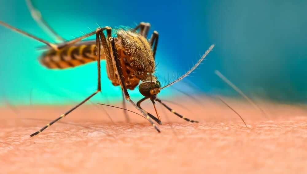 Супы оказались полезны в борьбе с малярией