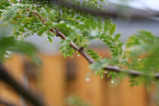 Лето в Москве и Петербурге начнется с похолодания