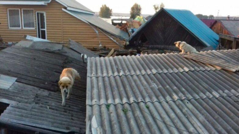 Спасение животных в Тулуне