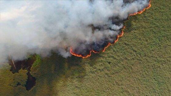 После окрика Путина в России за сутки ликвидировали десятки лесных пожаров