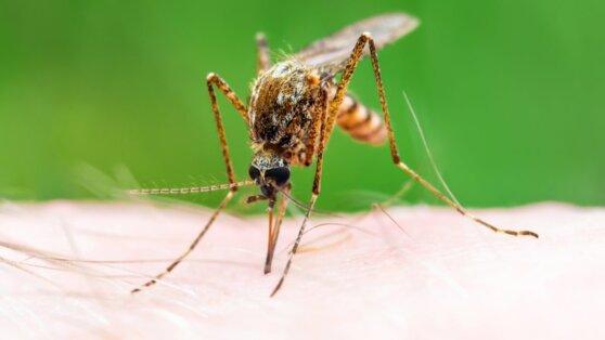 В Роспотребнадзоре оценили шансы заразиться коронавирусом от насекомых