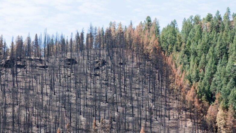 Картинки по запросу восстановление леса в сибири