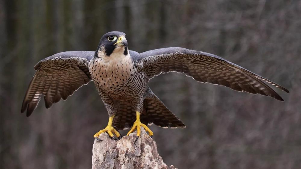 фото с названиями хищных птиц тверской области было предложено перенести