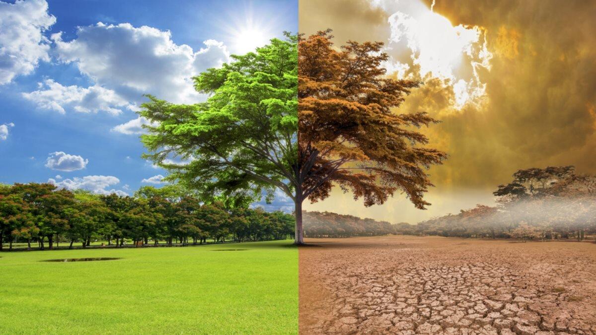 Глобальное потепление изменение климата загрязнение дерево