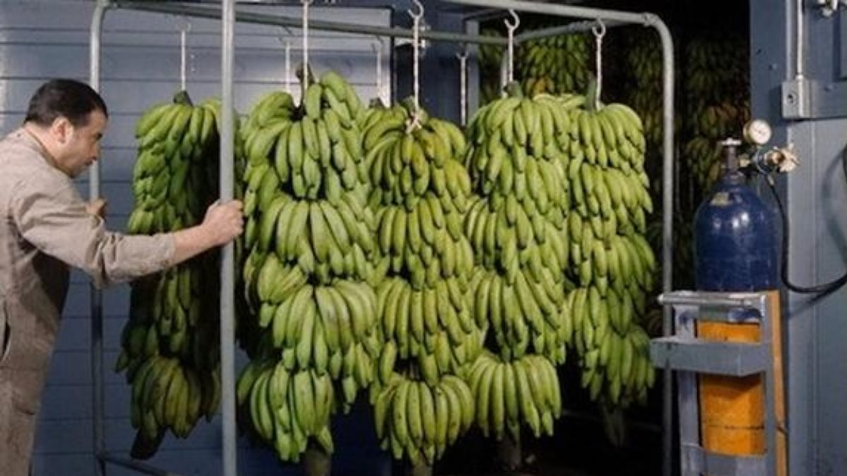 Назван вред от бананов для россиян