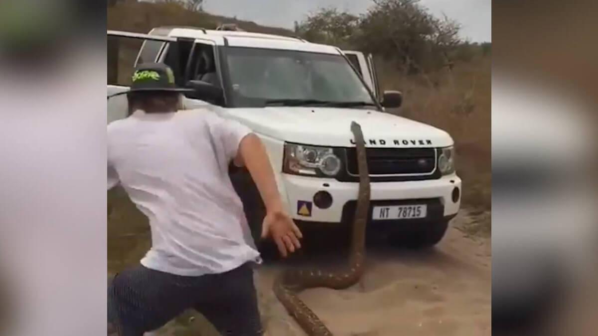В Африке на туристов напал питон