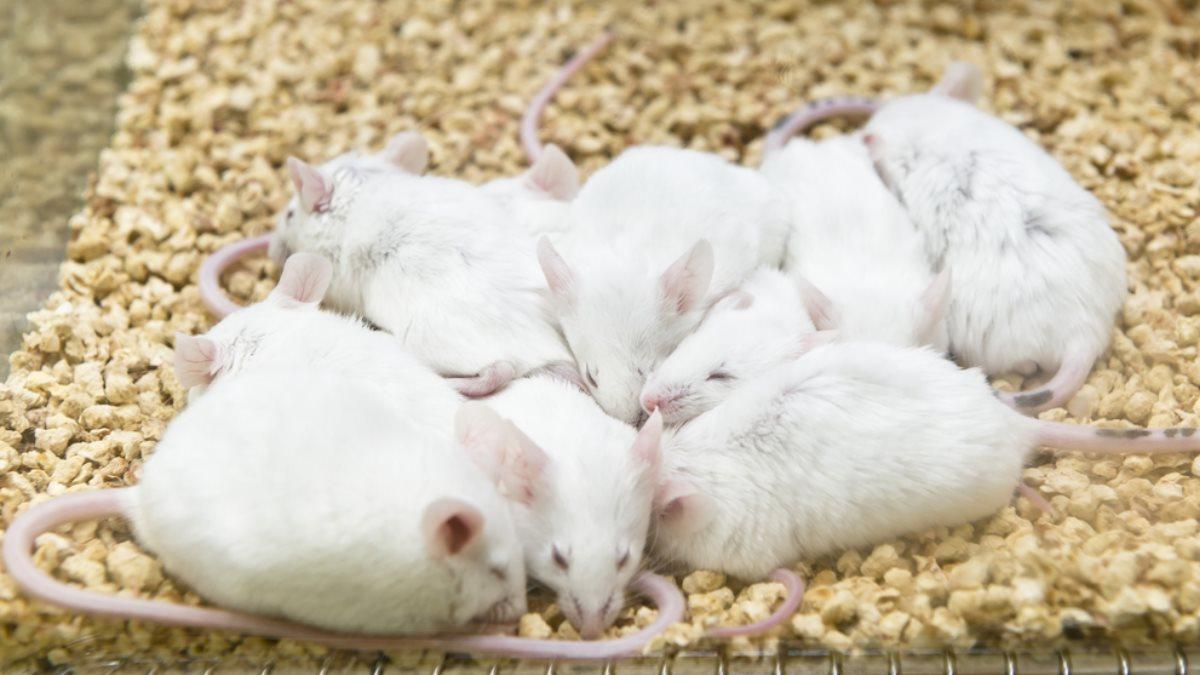 Исследователи обнаружили генную мутацию, позволяющую меньше спать