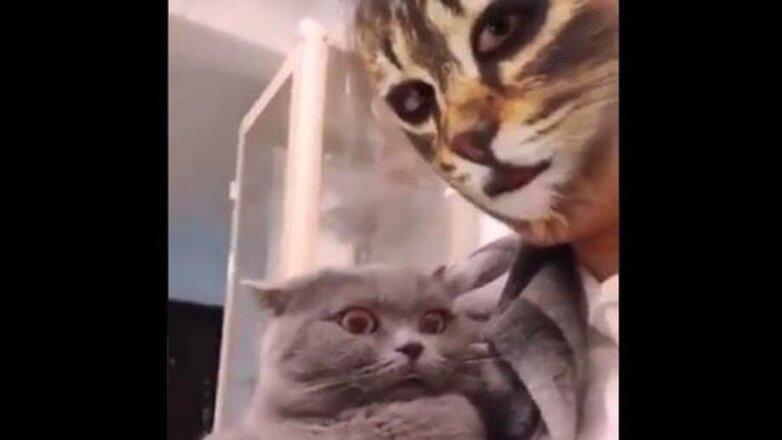 Видео с не узнающими своих хозяек кошками появилось в сети