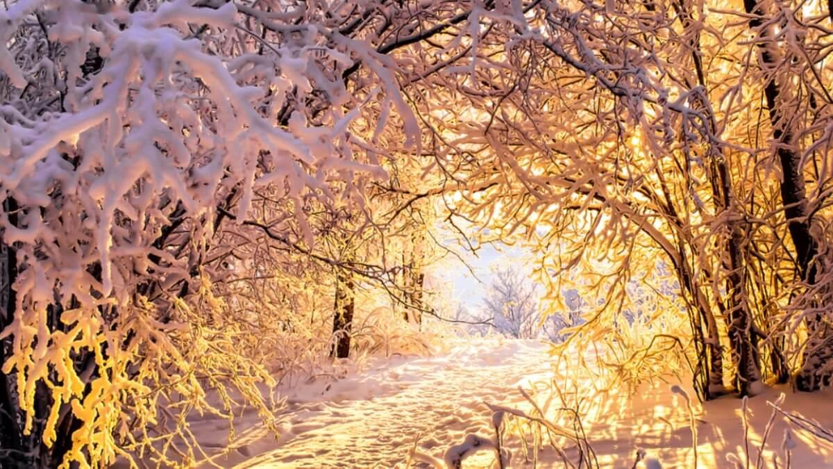 Прогноз погоды на три дня в Москве и Санкт-Петербурге: с 23 по 25 ноября