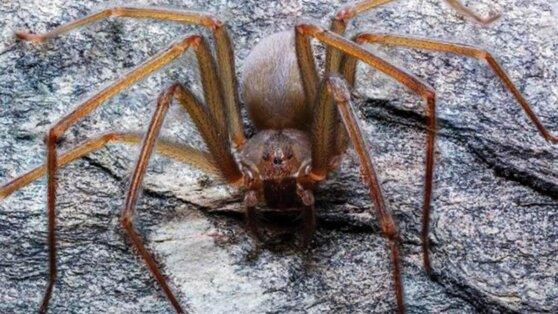 Иркутяне предпочли в качестве домашних питомцев пауков, скорпионов и рысей