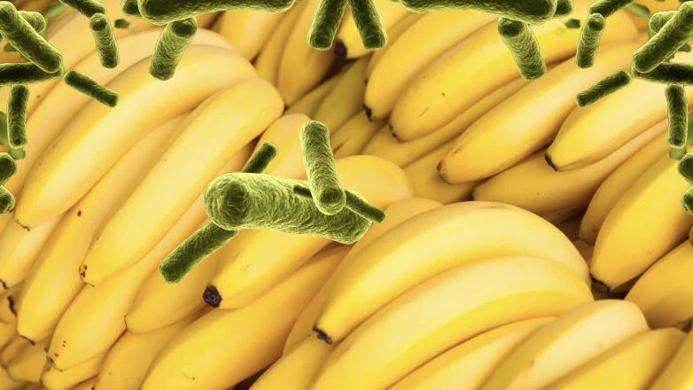 В Россию попали бананы с переносчиком холеры