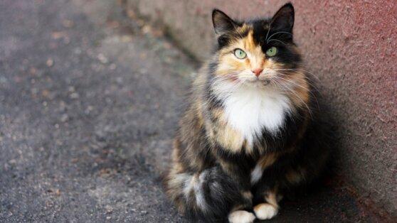 Ученые обнаружили COVID-19 у кошек