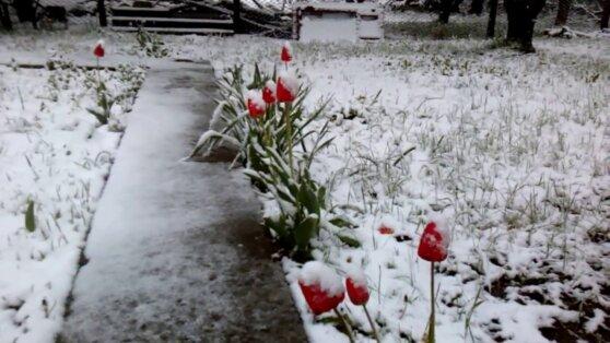 Метеорологи объяснили причины аномального тепла зимой в России